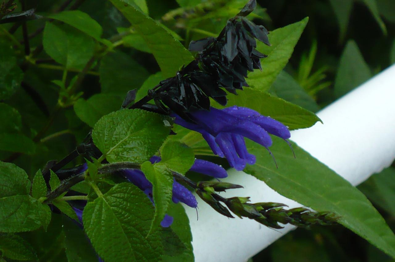 field_flowers_2