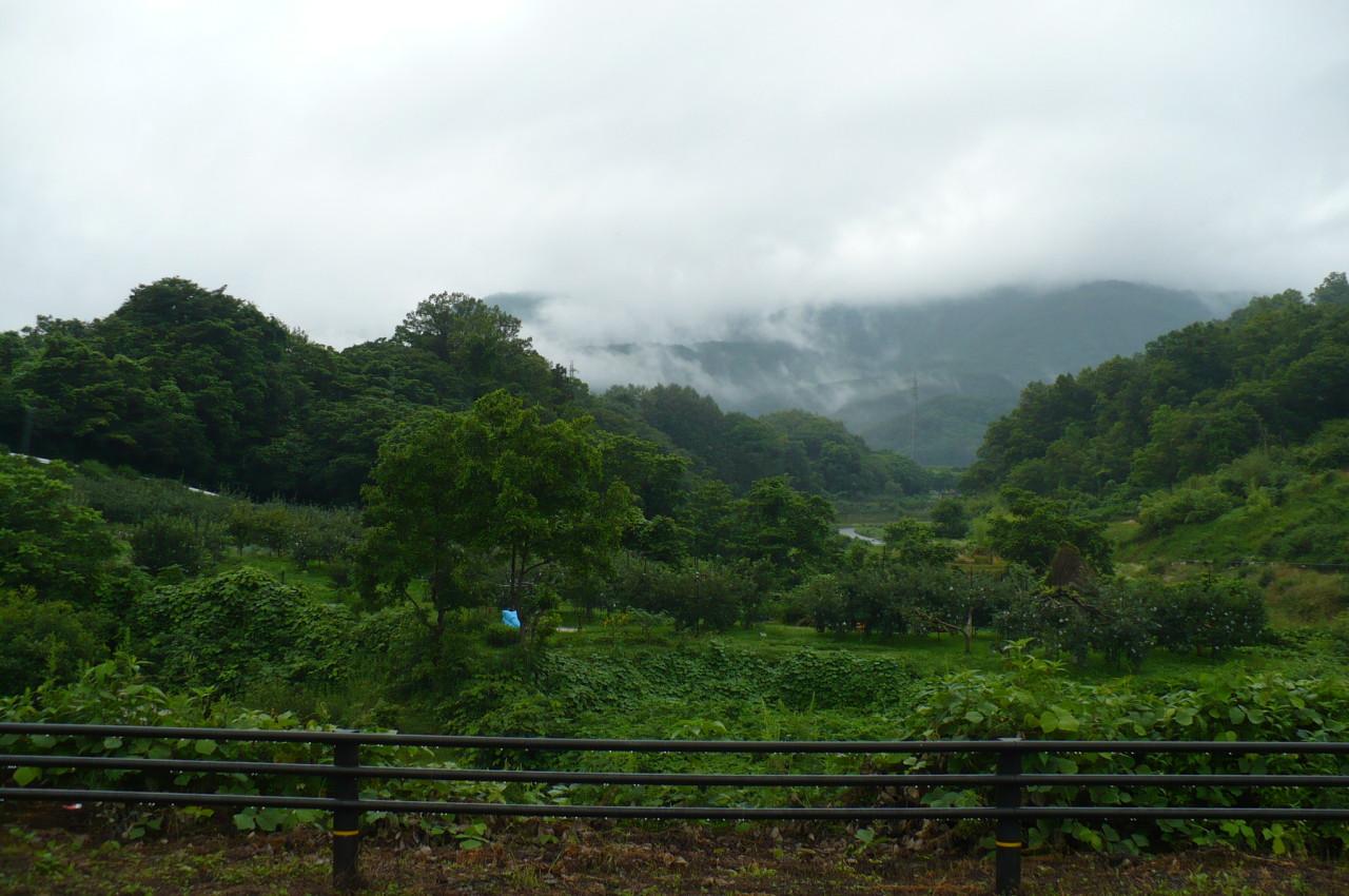 rainy season_07