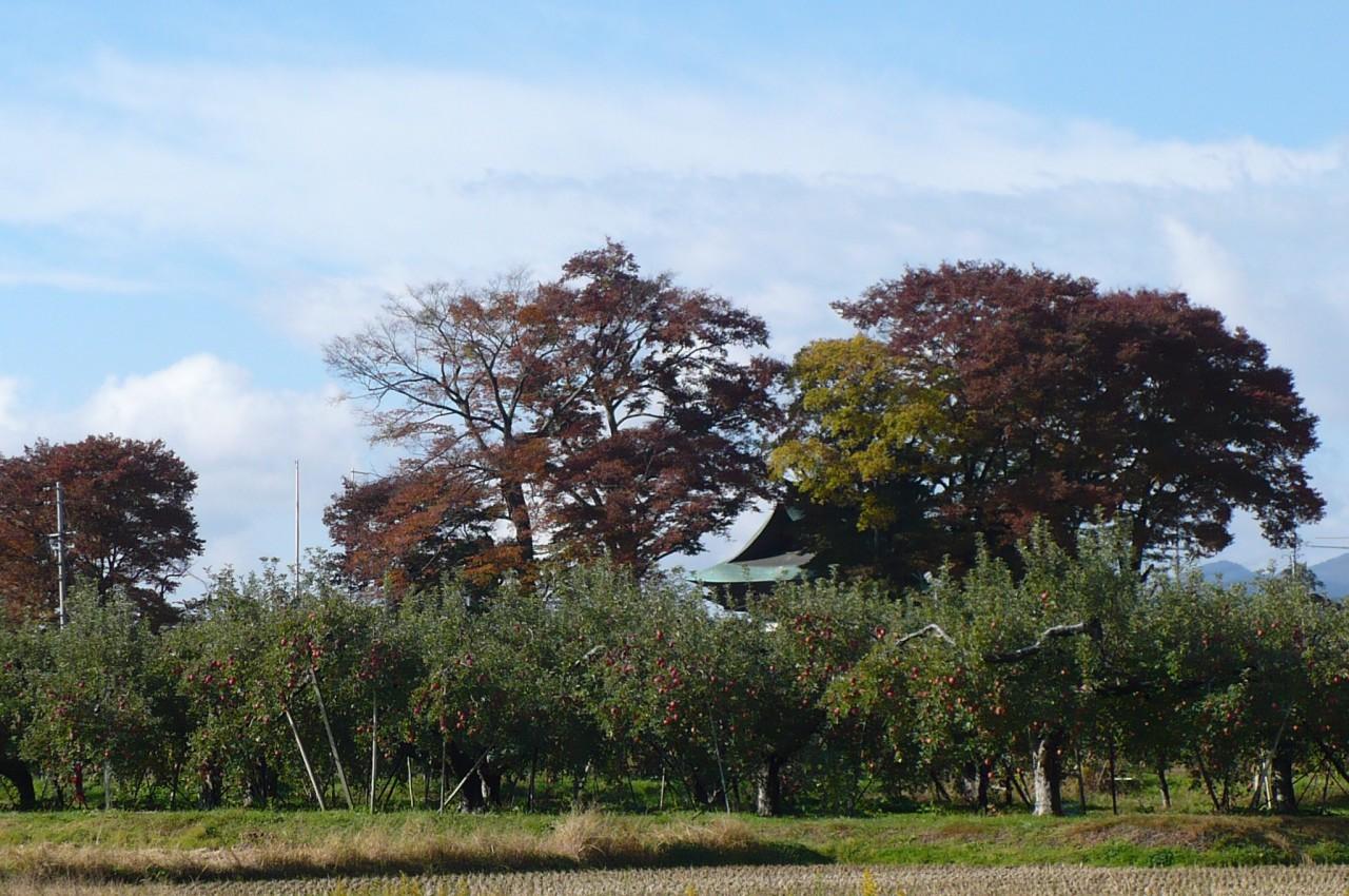 Late autumn '15_12