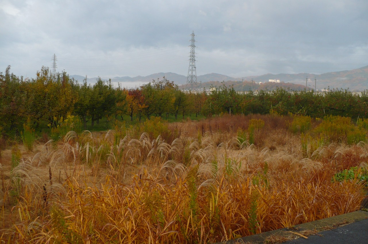 Late autumn '15_18