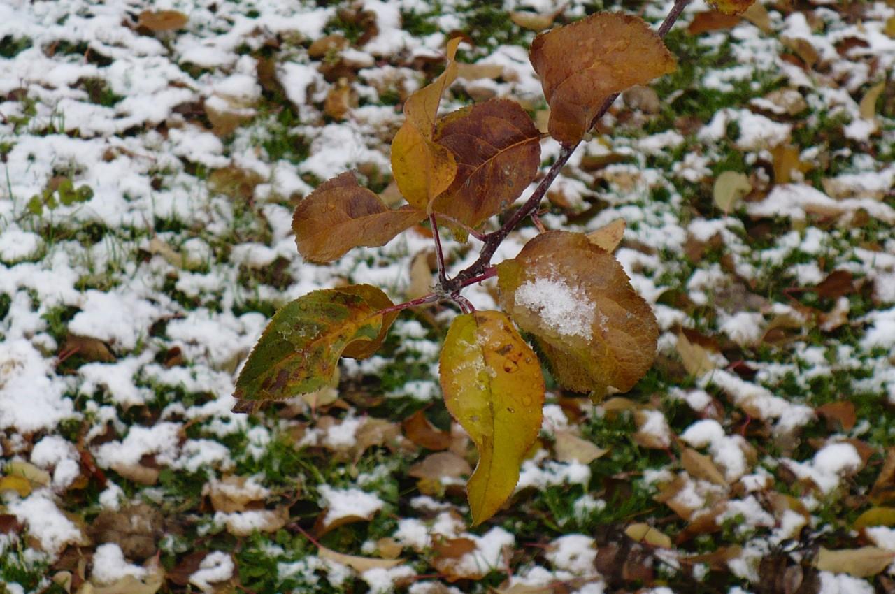 snow-scene_'15_10