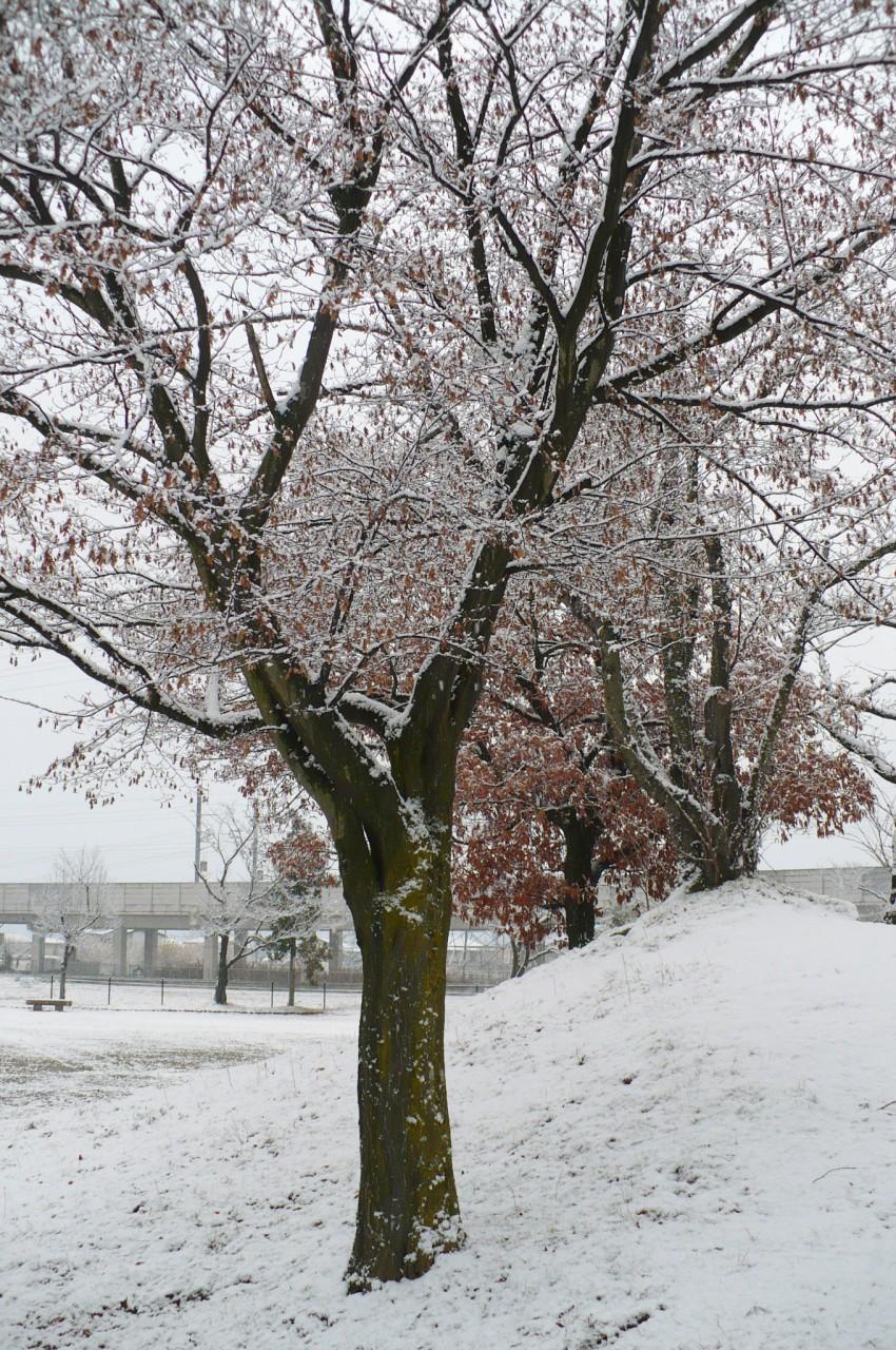 snow-scene_'15_6