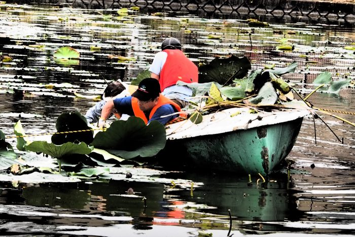 removal-of-lotus_11