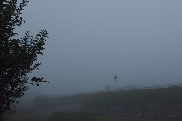 morning-fog_02