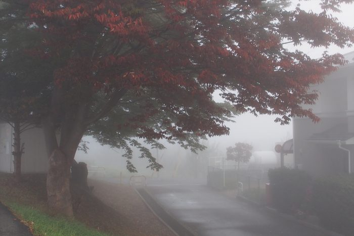 morning-fog_07