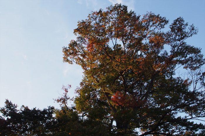 suwasya_autumn16_10
