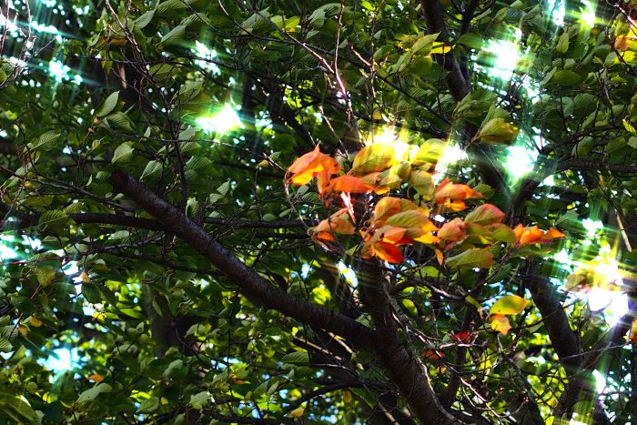 autumn-leaves_01