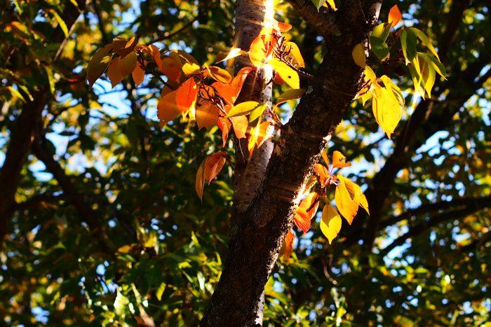 autumn-leaves_02