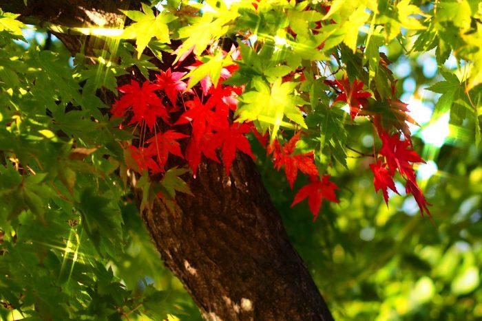 autumn-leaves_03