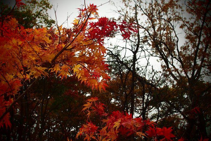 autumn-leaves_05