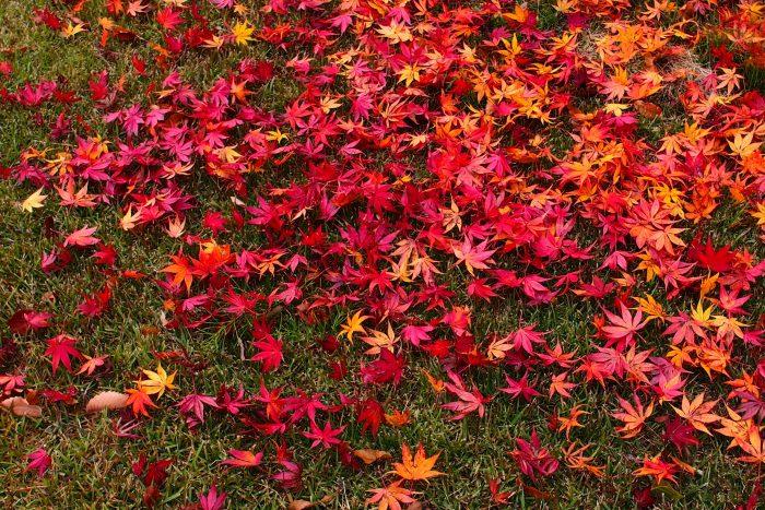 autumn-leaves_06