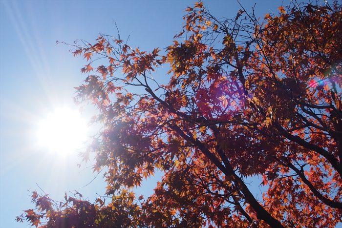 autumn-leaves_08
