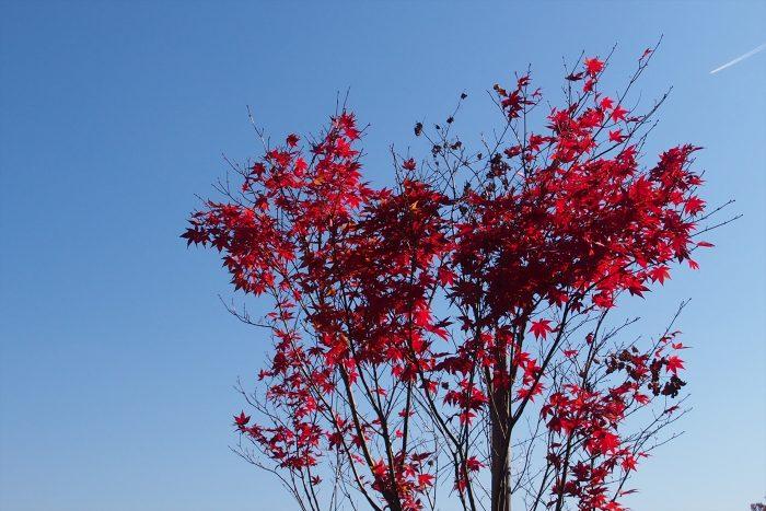 autumn-leaves_09