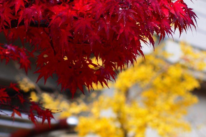 autumn-leaves_11