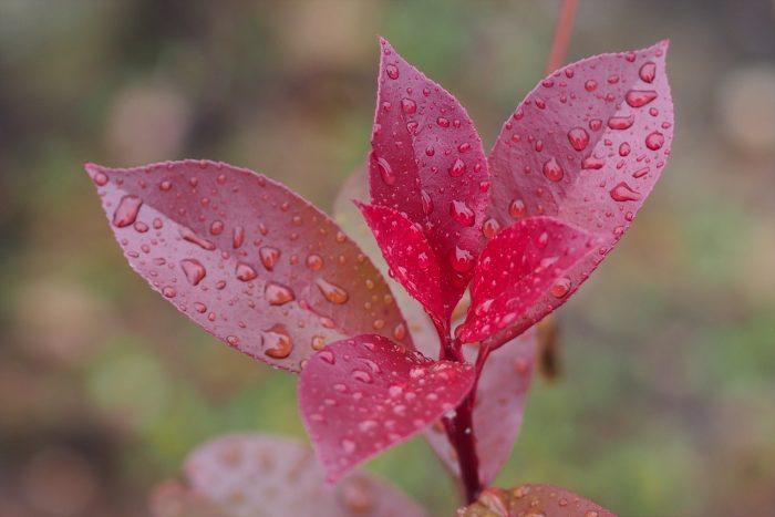 autumn-leaves_12