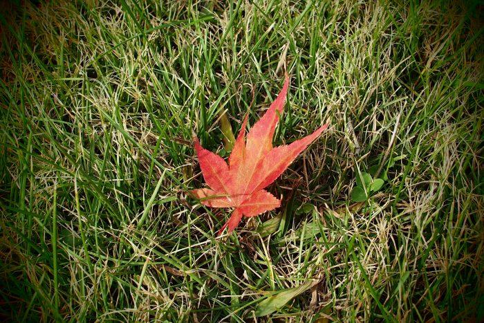 autumn-leaves_13