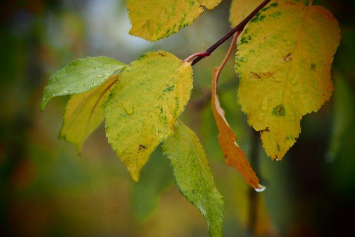 autumn-leaves_14