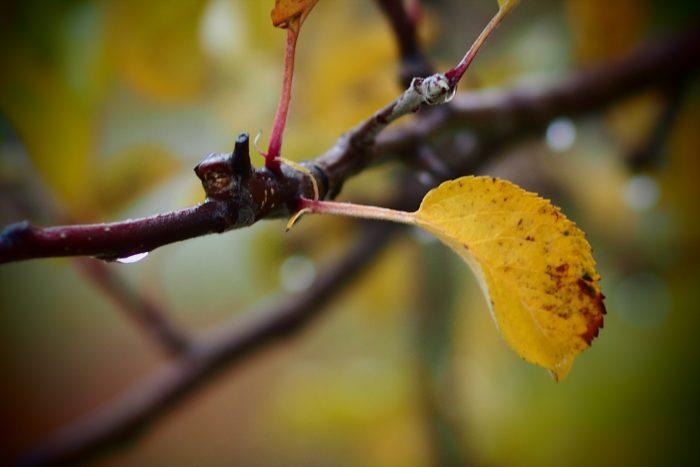 autumn-leaves_15