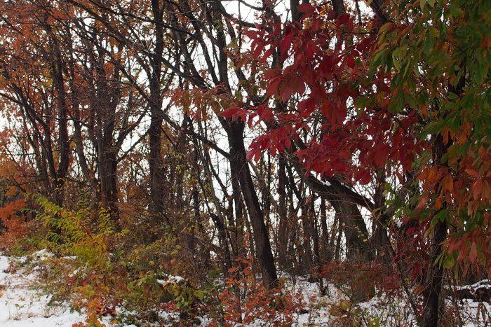 autumn-leaves_16