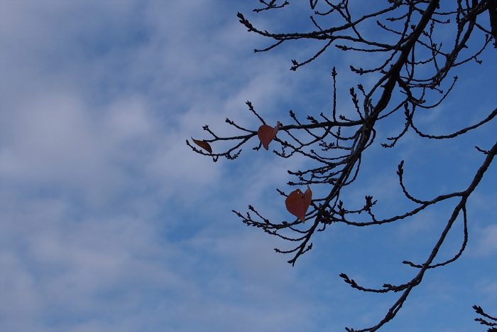 autumn-leaves_18