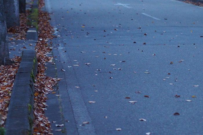 autumn-leaves_19
