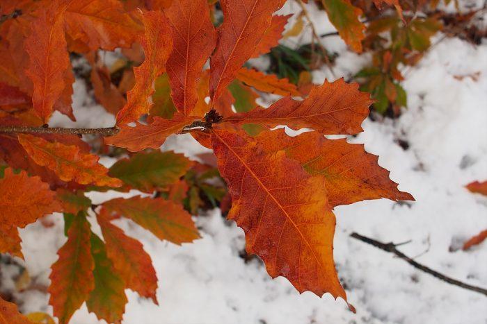 first-snow_18